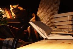 Libros y gato foto de archivo