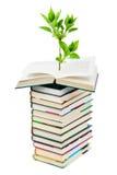 Libros y planta Fotografía de archivo libre de regalías