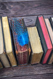 Libros y pluma del vintage Foto de archivo libre de regalías