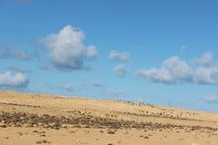 Libyer-sidra Royaltyfri Bild