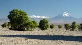 Licancabur Volcano, Andes Stock Image