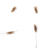 Lice. Images of different lice on a white background Stock Photos
