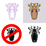 Lice Royalty Free Stock Images