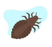 Lice Insect Royalty Free Stock Photos