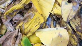 Licença amarela e marrom seca da banana fotografia de stock