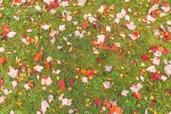 Licença colorida na terra, gramado do bordo para o fundo no parque Foto de Stock Royalty Free