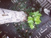 Licença da árvore Foto de Stock