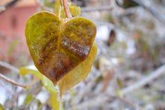 Licença da árvore congelada Imagem de Stock Royalty Free