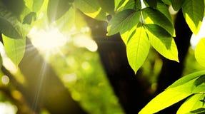 Licença da planta e ambiente verde natural Foto de Stock Royalty Free