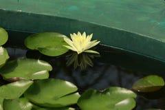 Licença de Lotus fotografia de stock