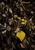 Licença de outono Fotos de Stock Royalty Free