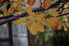 Licença de outono Fotografia de Stock Royalty Free