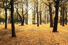 Licença de outono em Japão imagem de stock