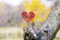 licença de outono vermelha Coração-dada forma Conceito do amor Fotos de Stock Royalty Free