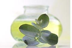 Licença do óleo e do eucalipto Fotos de Stock
