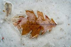 Licença do carvalho gravada no gelo de derretimento Imagem de Stock Royalty Free