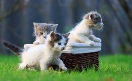 Licença recém-nascida dos gatinhos o ninho estão rastejando fora da cesta de madeira em que se estava sentando Fotos de Stock Royalty Free