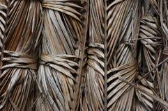 Licença seca da palma Fotografia de Stock