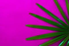 Licença tropical da palma no fundo cor-de-rosa fotos de stock royalty free