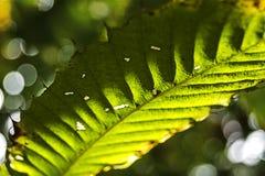 Licença tropical verde Fotos de Stock