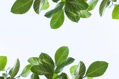 Licença verde fotografia de stock royalty free