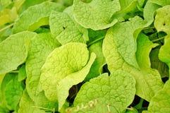 Licença verde Foto de Stock Royalty Free
