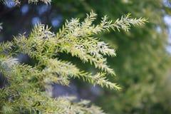 Licença verde da natureza como o fundo Fotografia de Stock Royalty Free