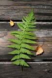 Licença verde da samambaia na tabela de madeira velha Fotos de Stock Royalty Free