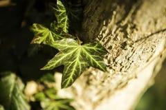 Licença verde na árvore com fundo borrado foto de stock