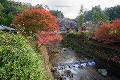 Licença vermelha do fundo da paisagem do outono em Obara Nagoya Japão Fotografia de Stock