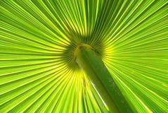 Licença verde Fotos de Stock