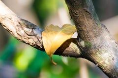Licencia amarilla en árbol Foto de archivo libre de regalías