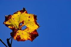 Licencia amarilla en el cielo Fotos de archivo