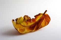 Licencia anaranjada Fotografía de archivo libre de regalías