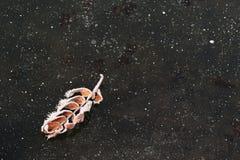 Licencia caida cubierta con escarcha en el hielo negro con el poli de las burbujas de aire Imagen de archivo libre de regalías