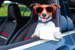 Licencia de conductores del perro Foto de archivo libre de regalías