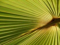 Licencia de la palma Imagen de archivo