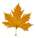 Licencia de otoño Imagenes de archivo