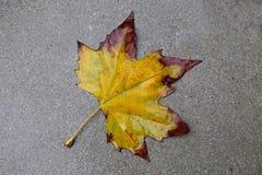 Licencia de otoño Imágenes de archivo libres de regalías