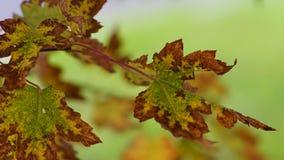 Licencia de otoño Imagen de archivo libre de regalías
