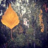 Licencia de otoño fotografía de archivo libre de regalías