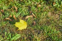 Licencia de otoño amarilla en una hierba verde foto de archivo libre de regalías