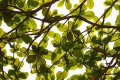 Licencia verde Imagenes de archivo