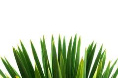 Licencia verde aislada sobre el fondo blanco Foto de archivo libre de regalías