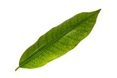 Licencia verde en el fondo blanco foto de archivo