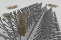 Lices on comb. 3d render of lices on comb vector illustration