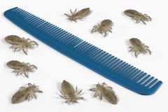 Lices on comb. 3d render of lices on comb stock illustration