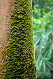 Lichen. On tree bole,look like a abstract painting Royalty Free Stock Image