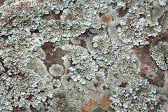 Lichen photos stock