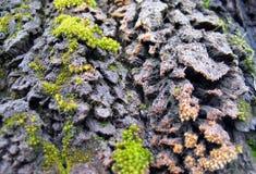 Lichen. On tree bark Stock Photos